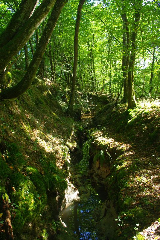Le ruisseau qui longe le terrain, plein d'argile